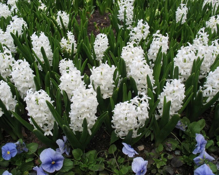 ней цветы цветущие в мае фото и название собрались