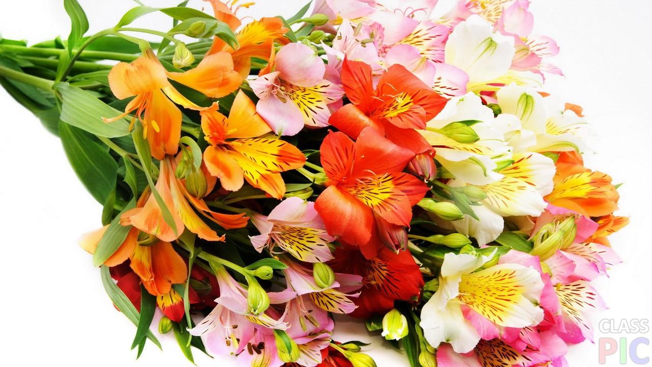 Лучшие фото букетов цветов