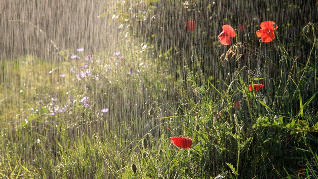 На большей части страны пройдут дожди, на юге и западе жара