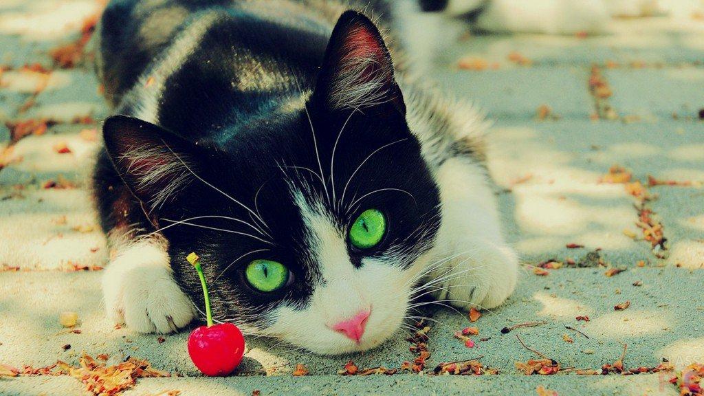 Картинки с котиками на телефон