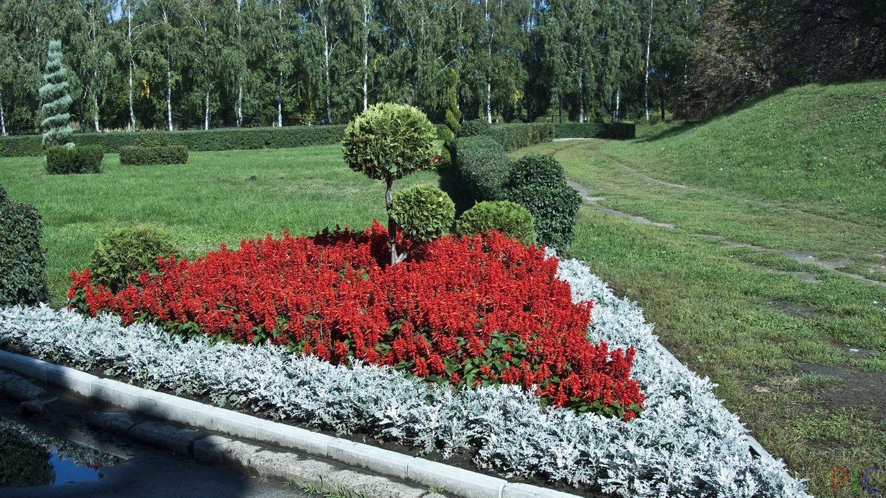 Услуга цветы на дом