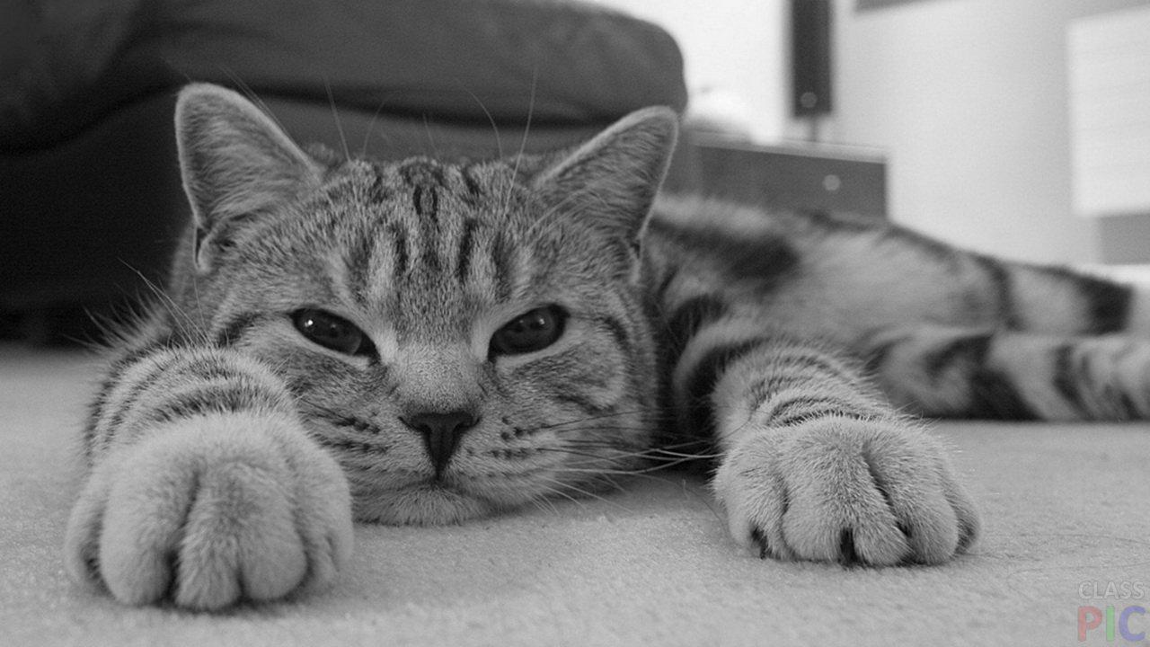 Котики (30 фото)