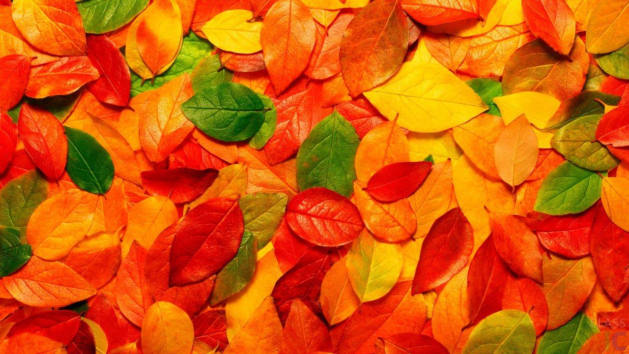 Осенние листья картинки