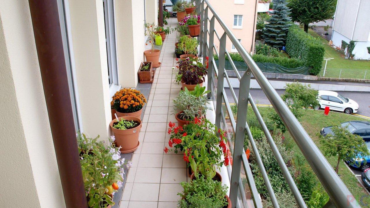Цветник на узком балконе фото дизайн