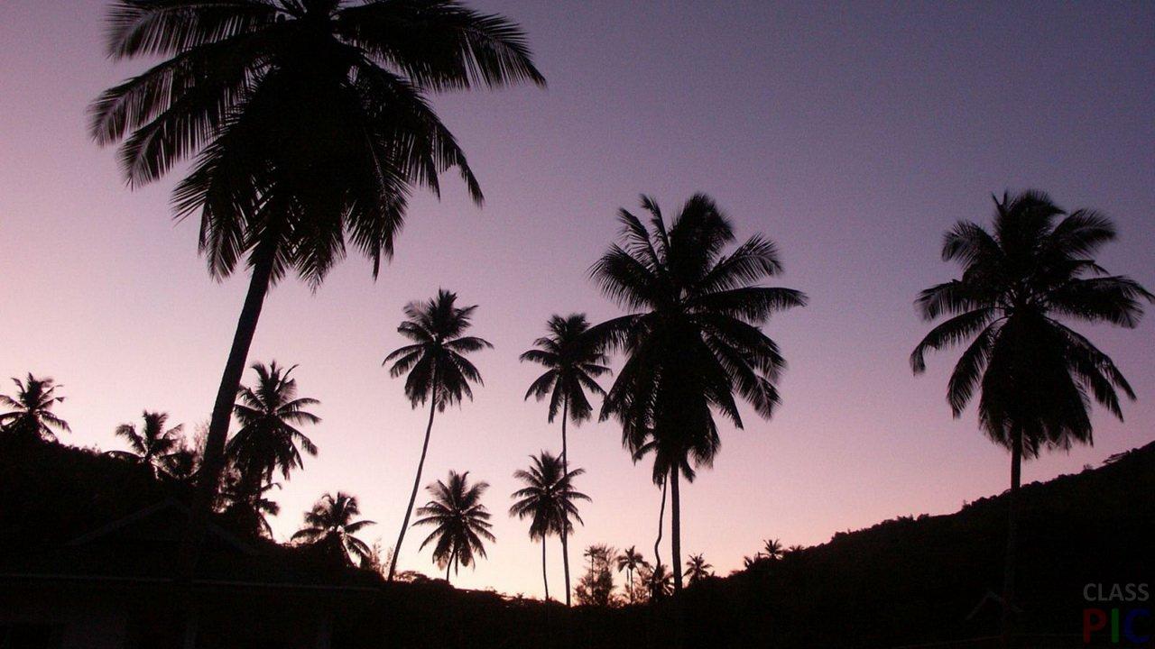 Пальма (26 фото)