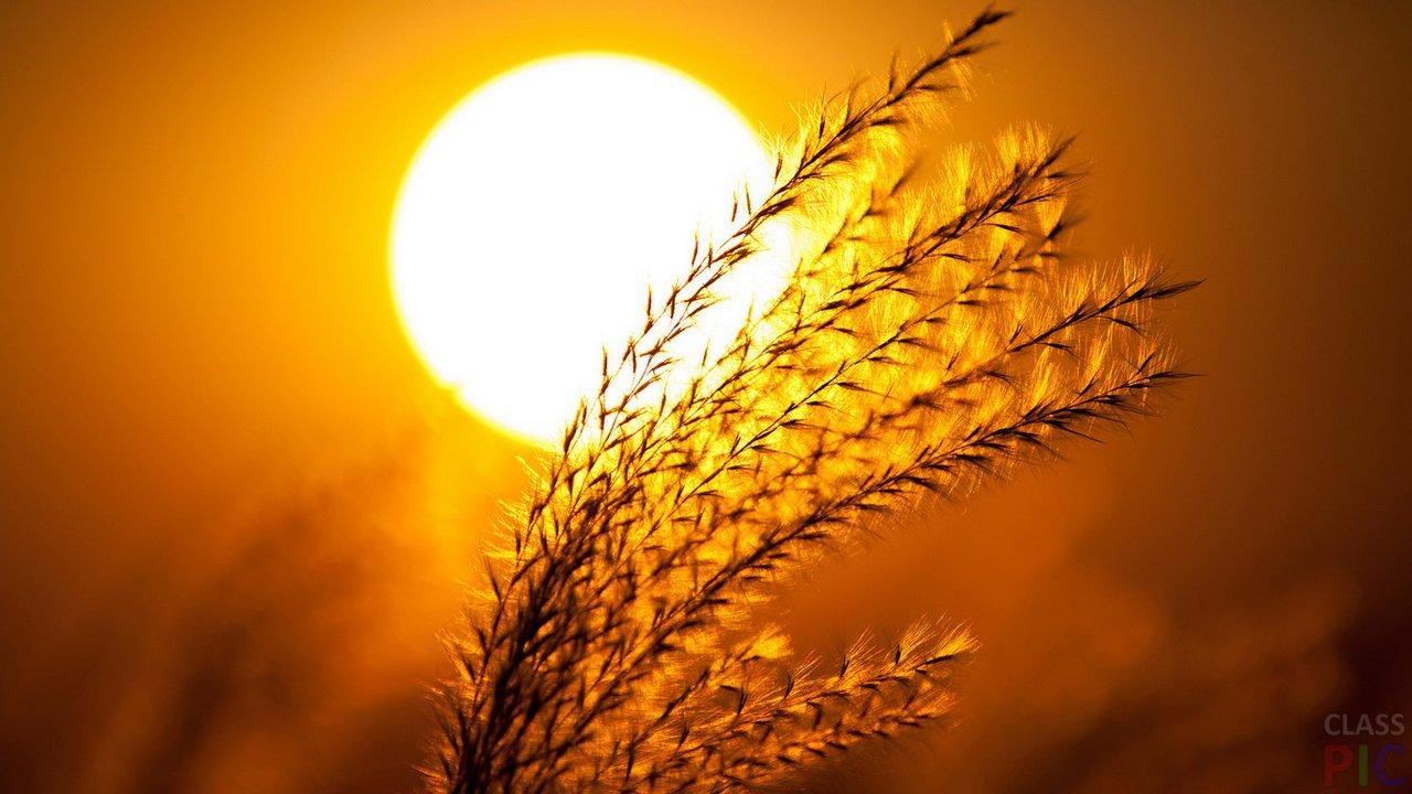 Солнце (26 фото)