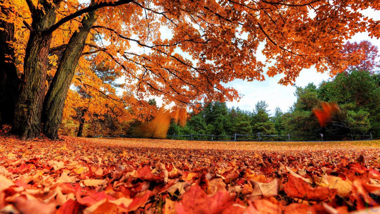 Осенние листья (40 фото)