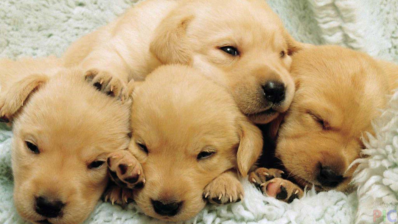 маленькие щенята