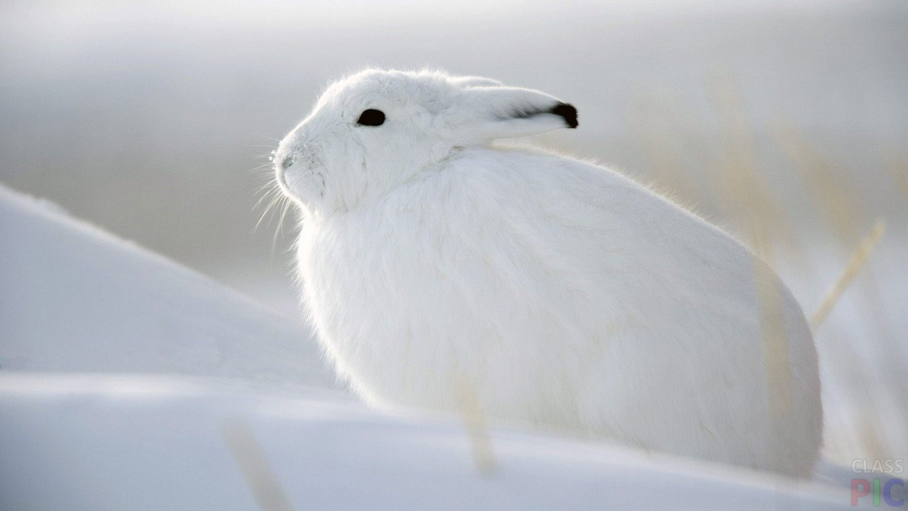 Заяц (24 фото)