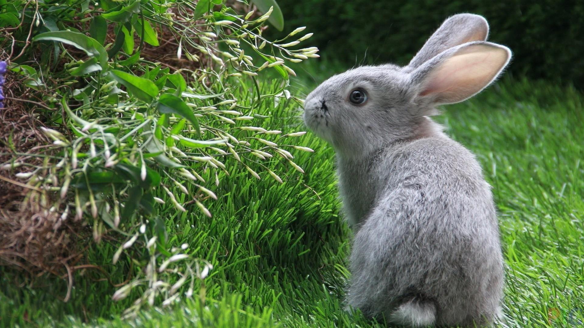 Картинки зайчика на траве