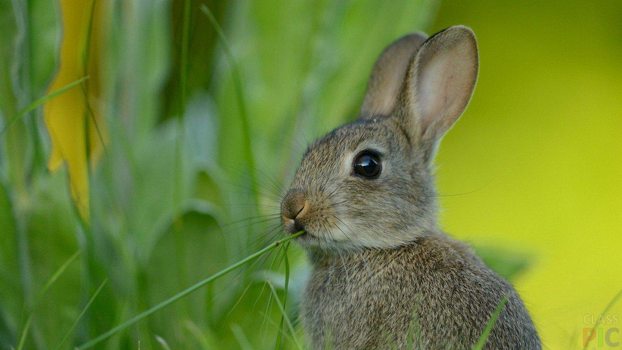 Заяц смотреть картинки