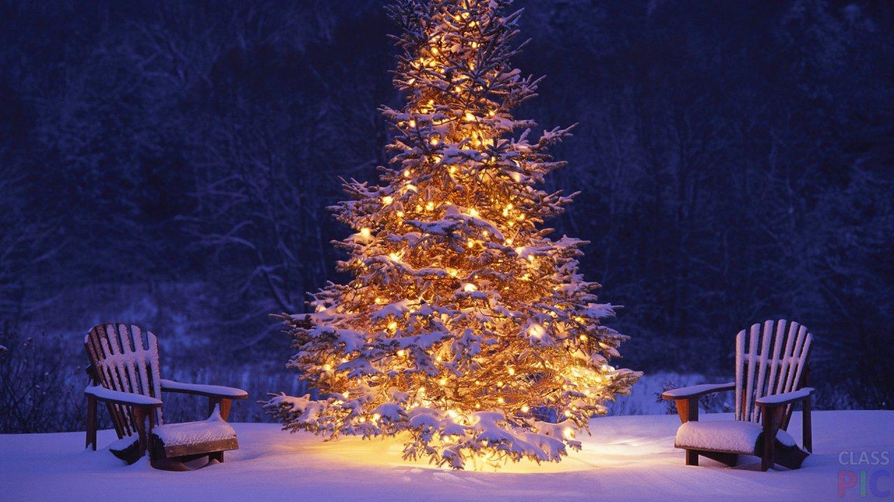 Новогодняя ёлка (46 фото)