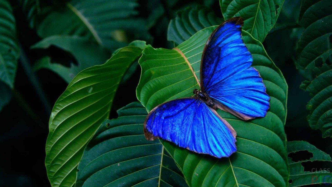 Бабочки (41 фото)