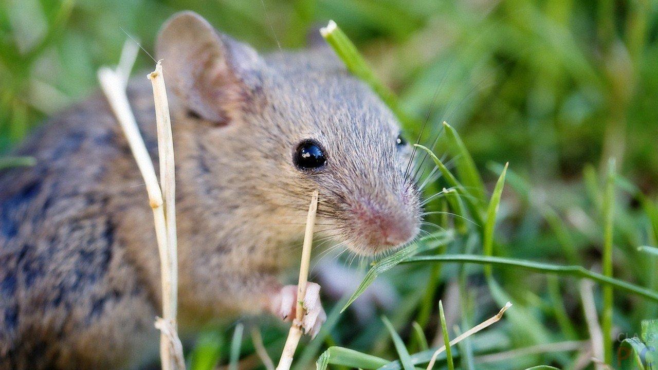 журнал про фотографии зеленых мышей как сшить попону