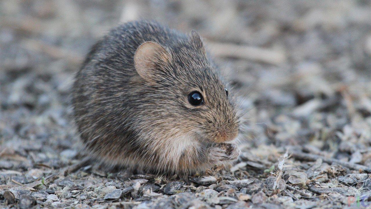 малую фотографии зеленых мышей модным стало