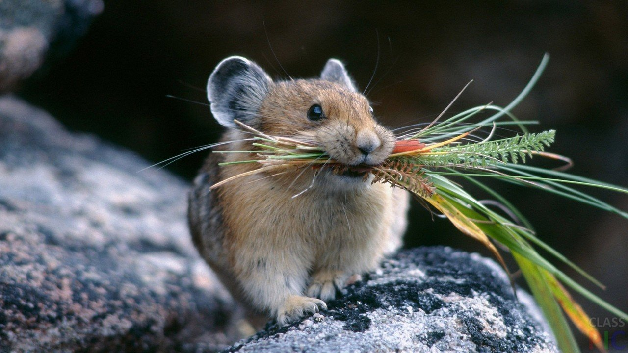 Мышь (30 фото)
