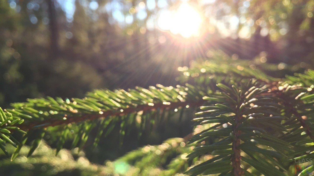 Лес (49 фото)