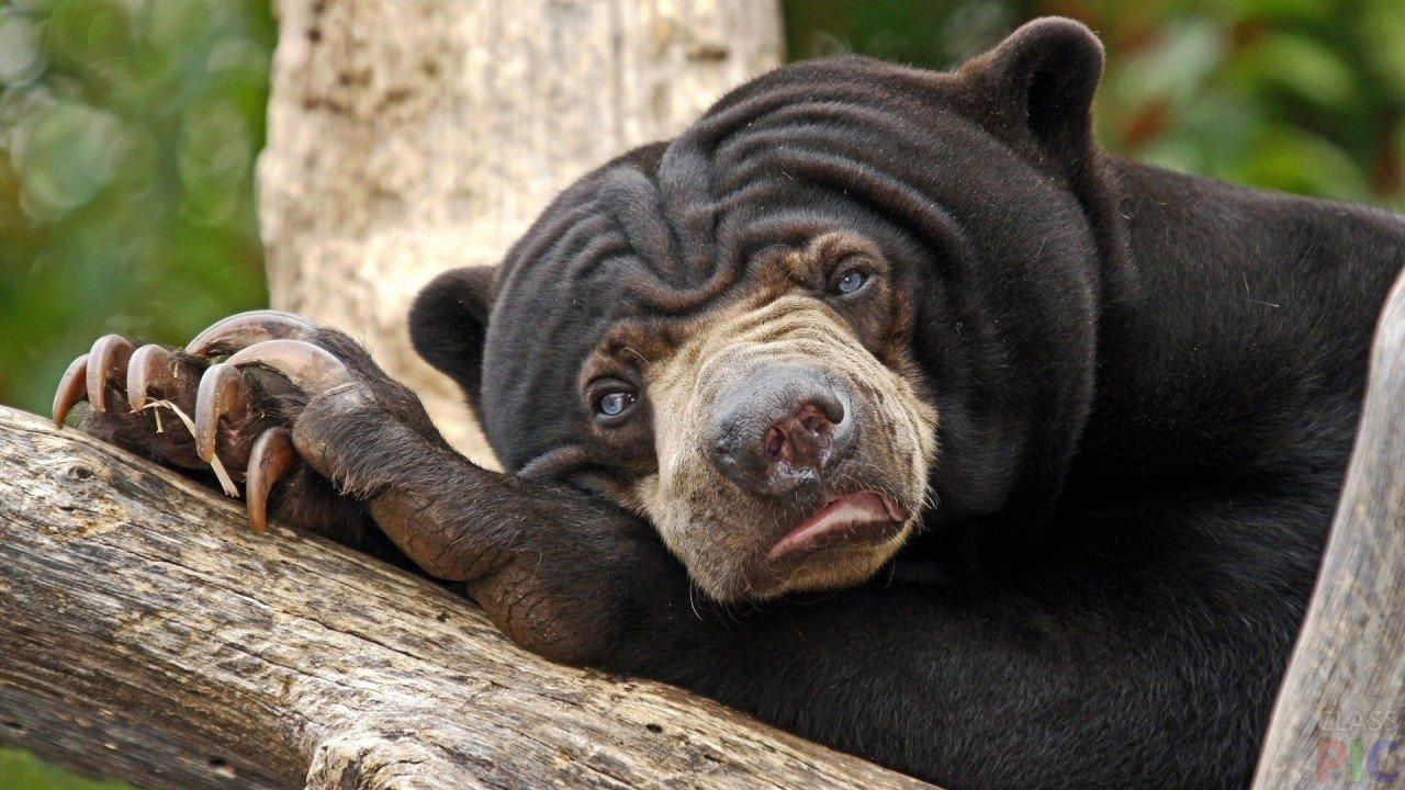 Медведь (50 фото)