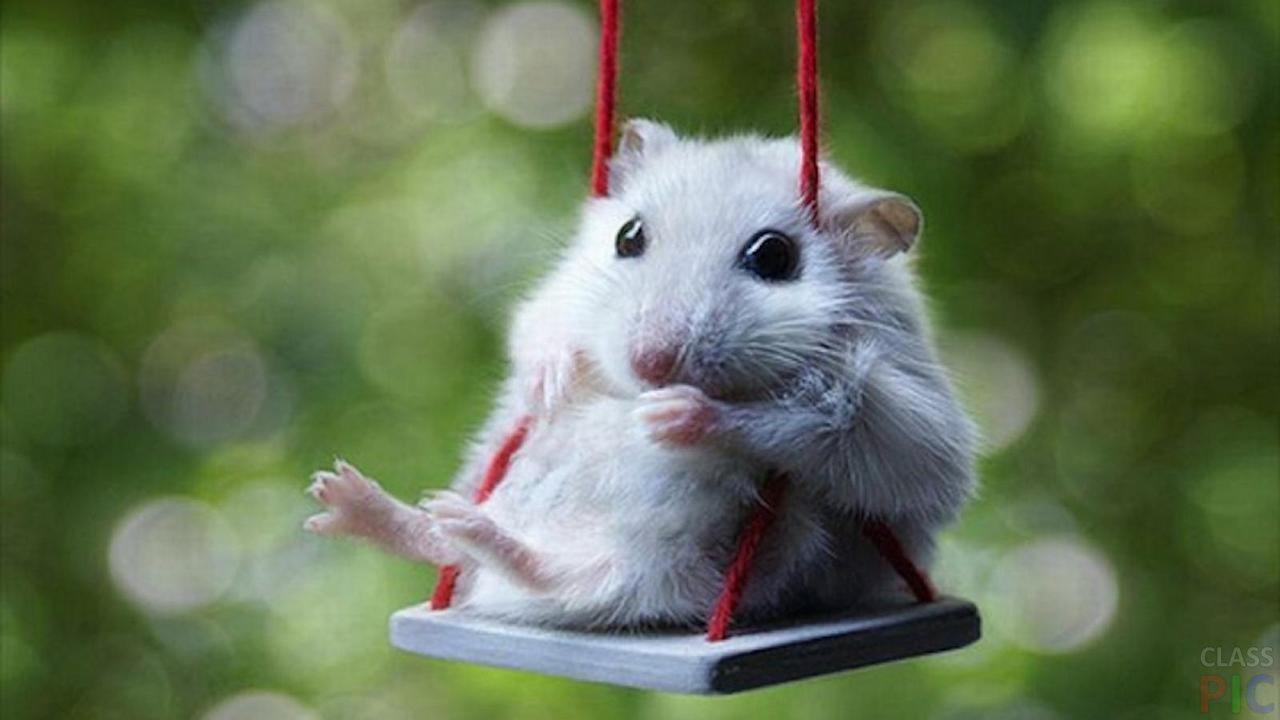 Мышка (24 фото)