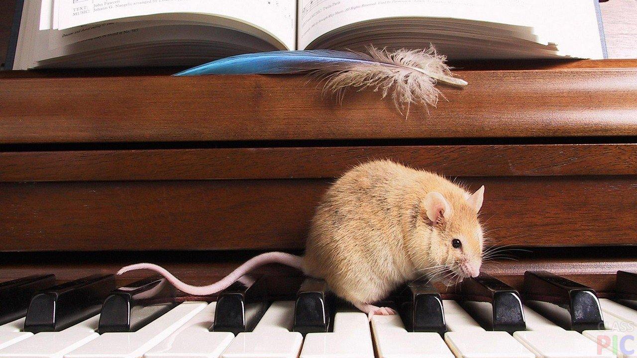 попросила мышка на пианино картинки китайцы сфотографировали