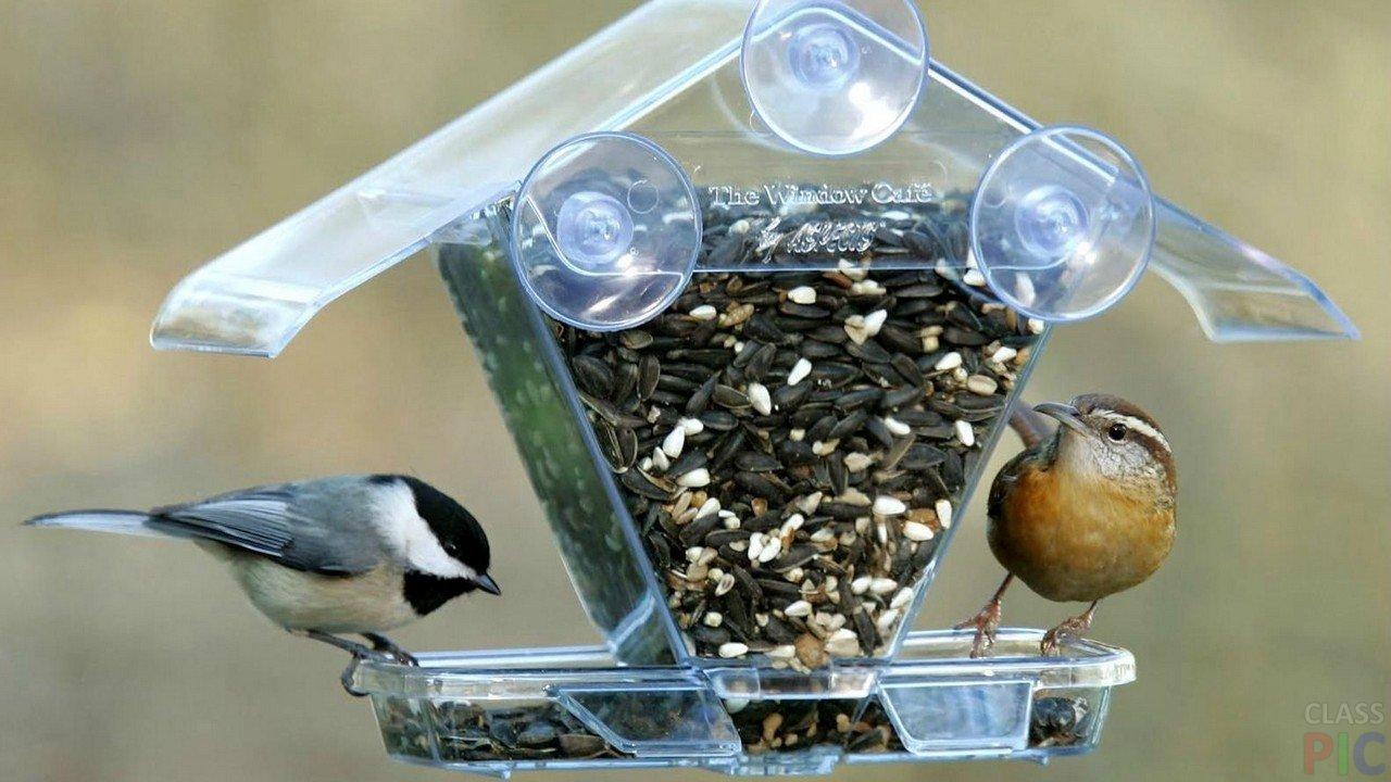 Кормушки для птиц (34 фото)