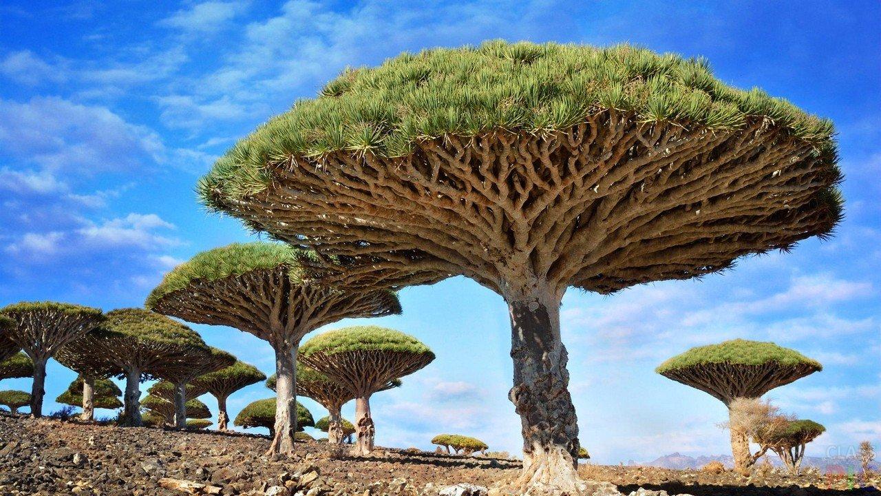 Дерево (50 фото)