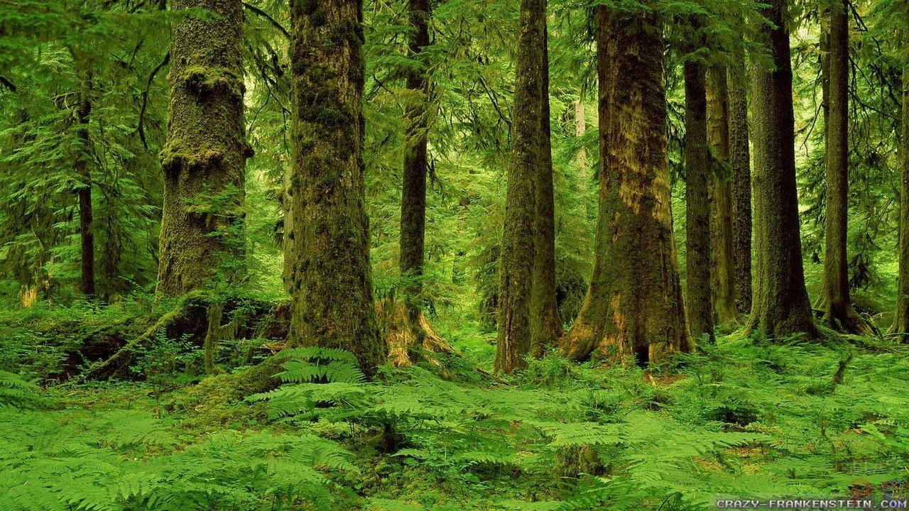 День лесов (42 фото)