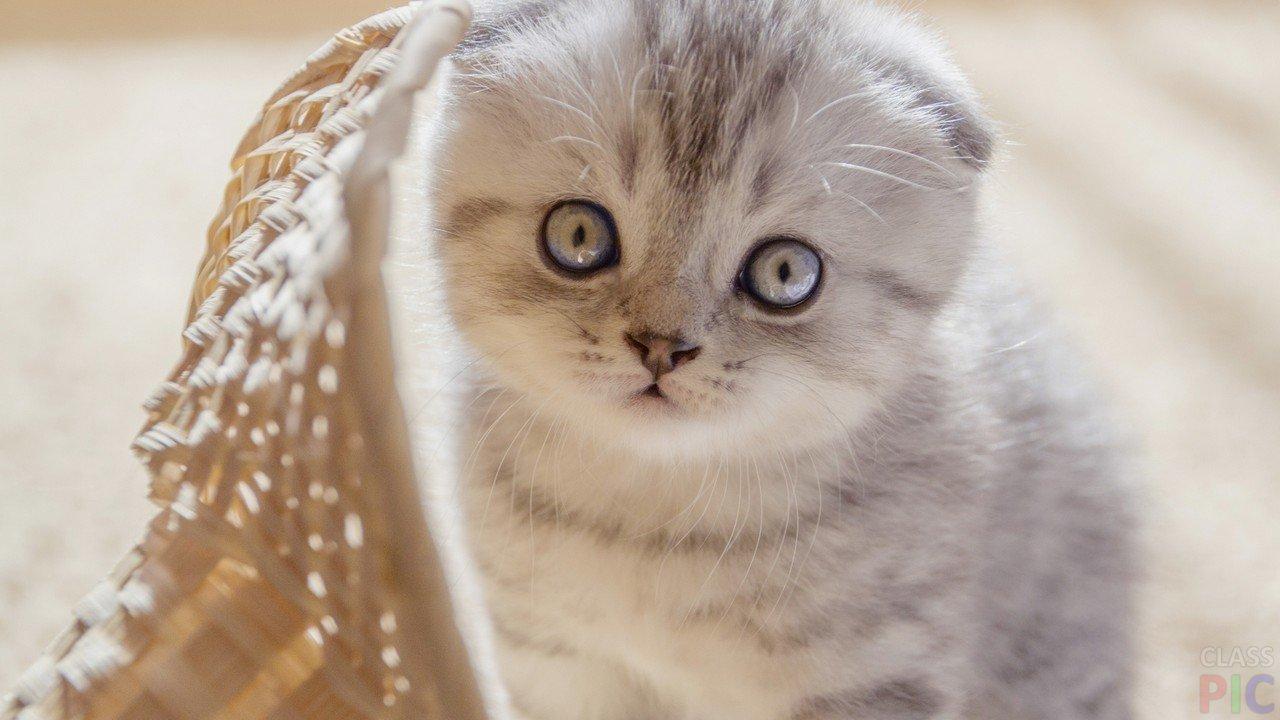 Маленькие котики (47 фото)