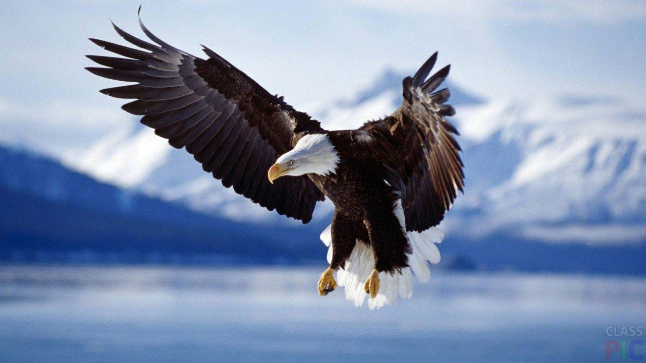 Орёл (35 фото)