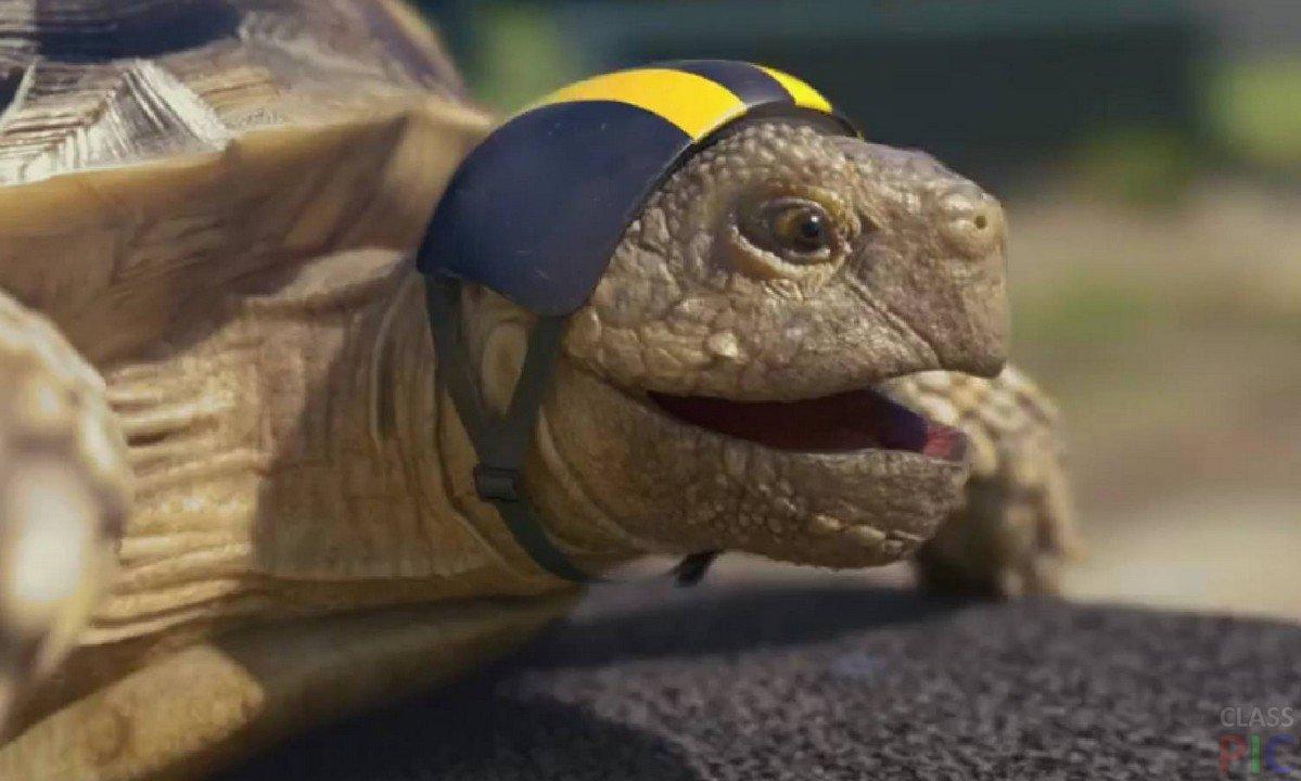 Бегущая черепаха картинки