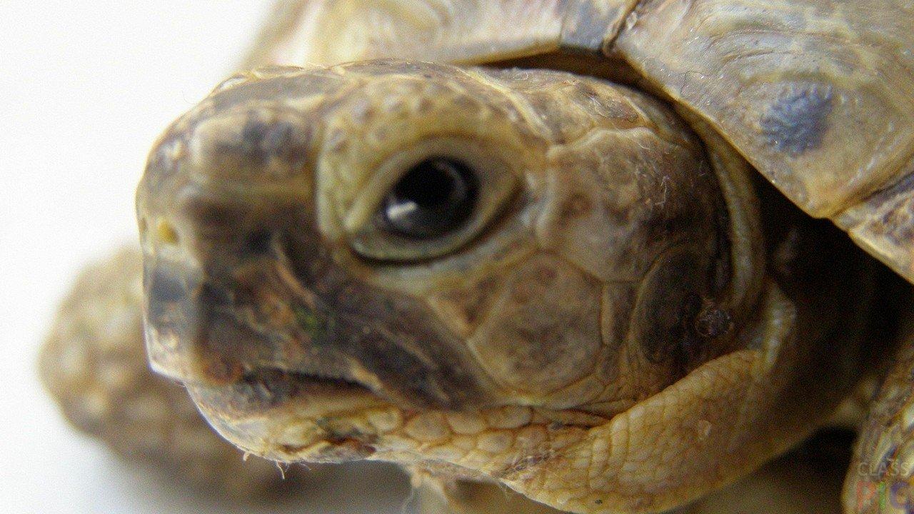 Фото черепах