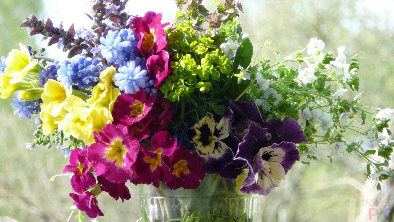 Фото весенних цветов