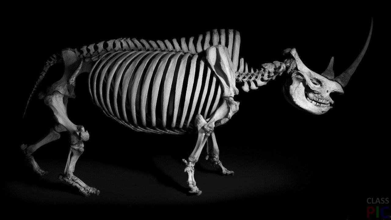 Скелеты животных и человека картинки