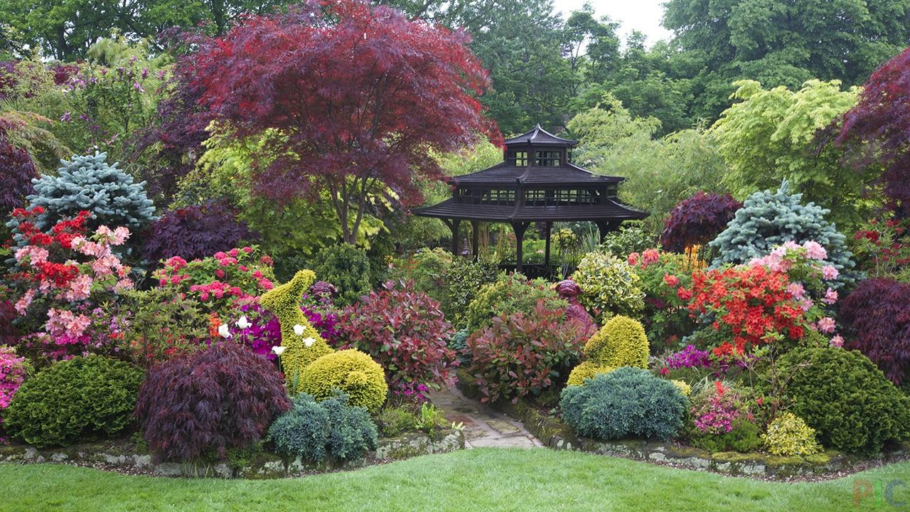 Фото кустарников для сада