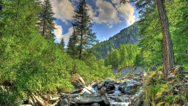 Красивые фото леса