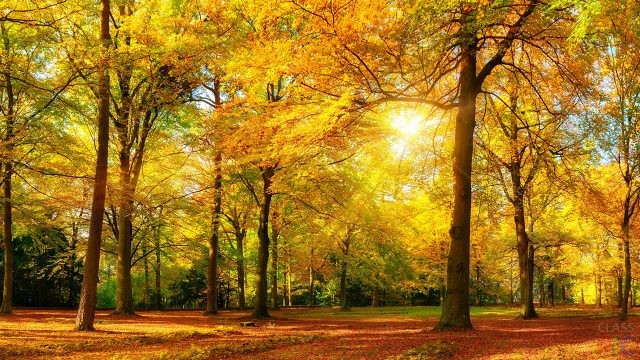 Фото деревьев осенью