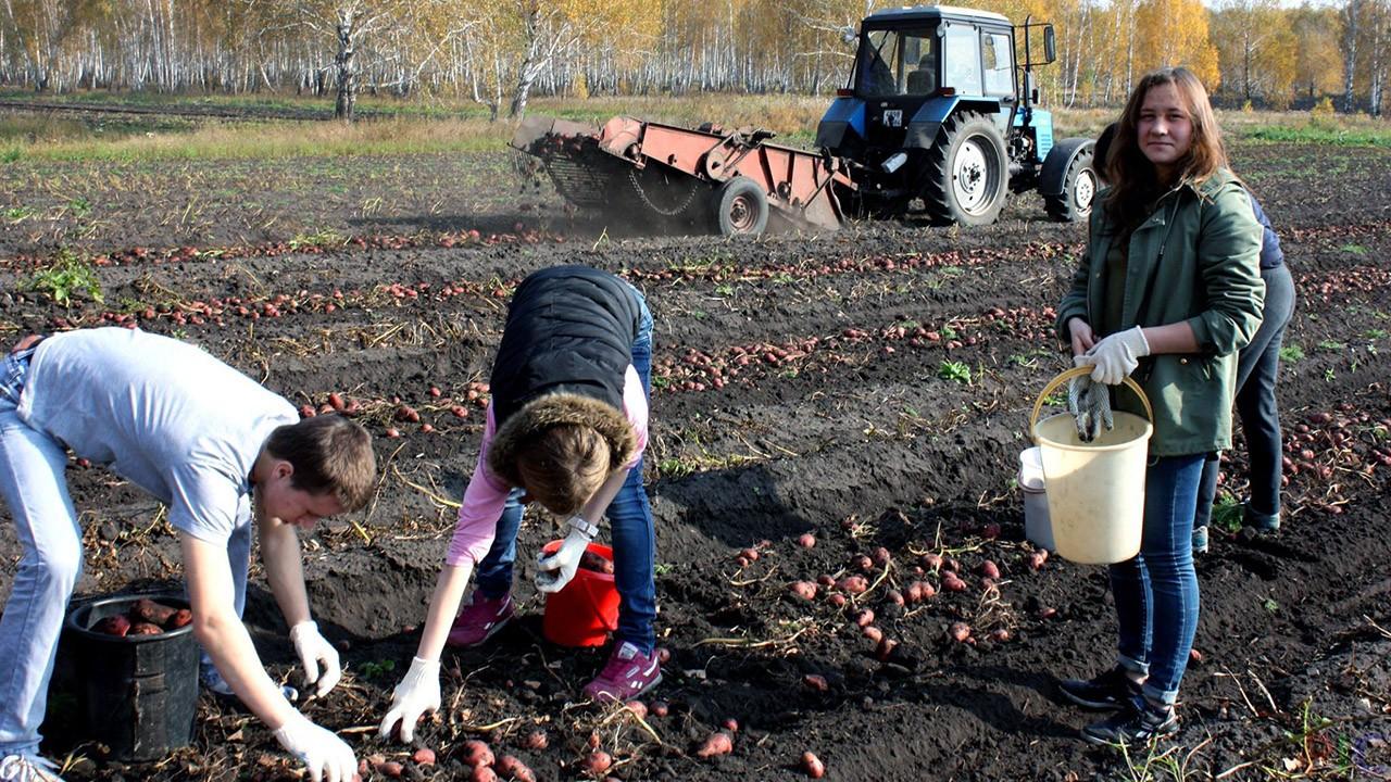картинки с уборкой урожая прикольные овладеть