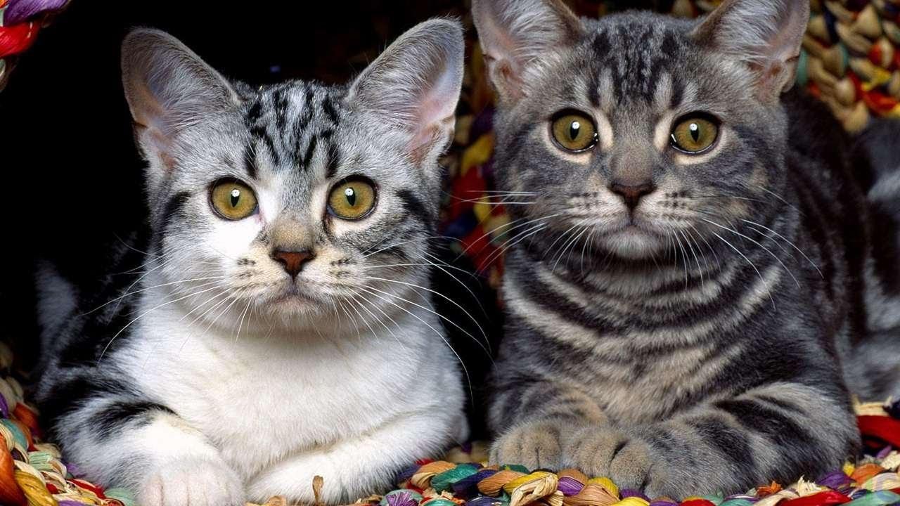 Красивые кошки (38 фото)