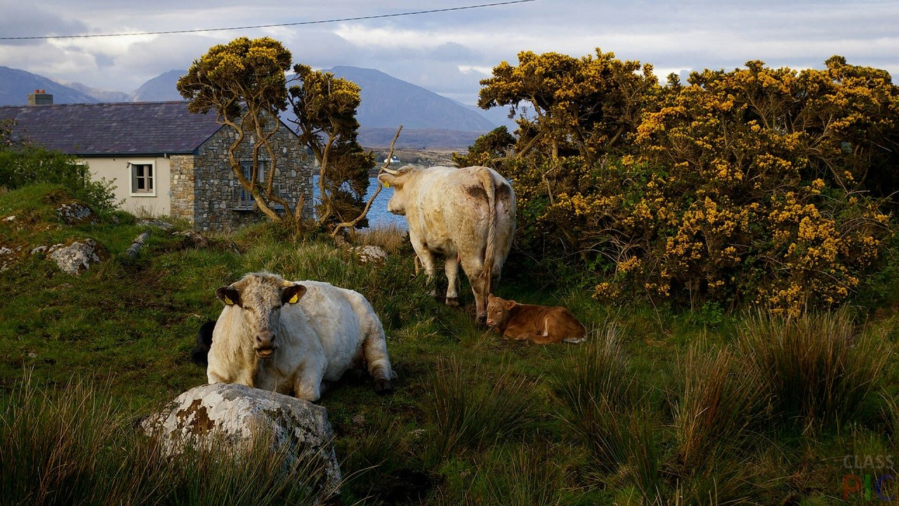 ростове левобережном фото животного мира ирландии течение видно, оно