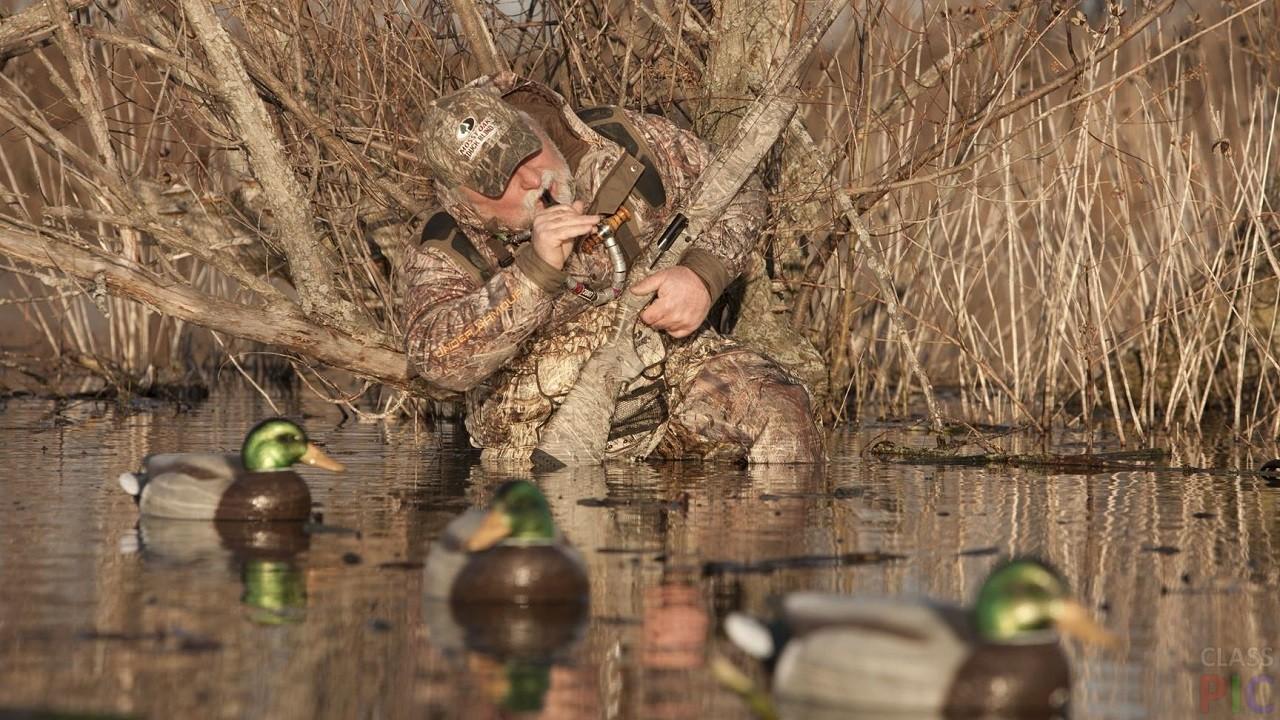 картинки удачной охоты на уток курс хоть дает