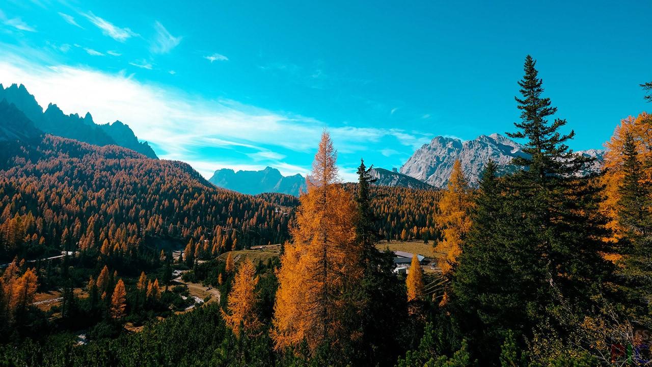 Осенний лес (45 фото)