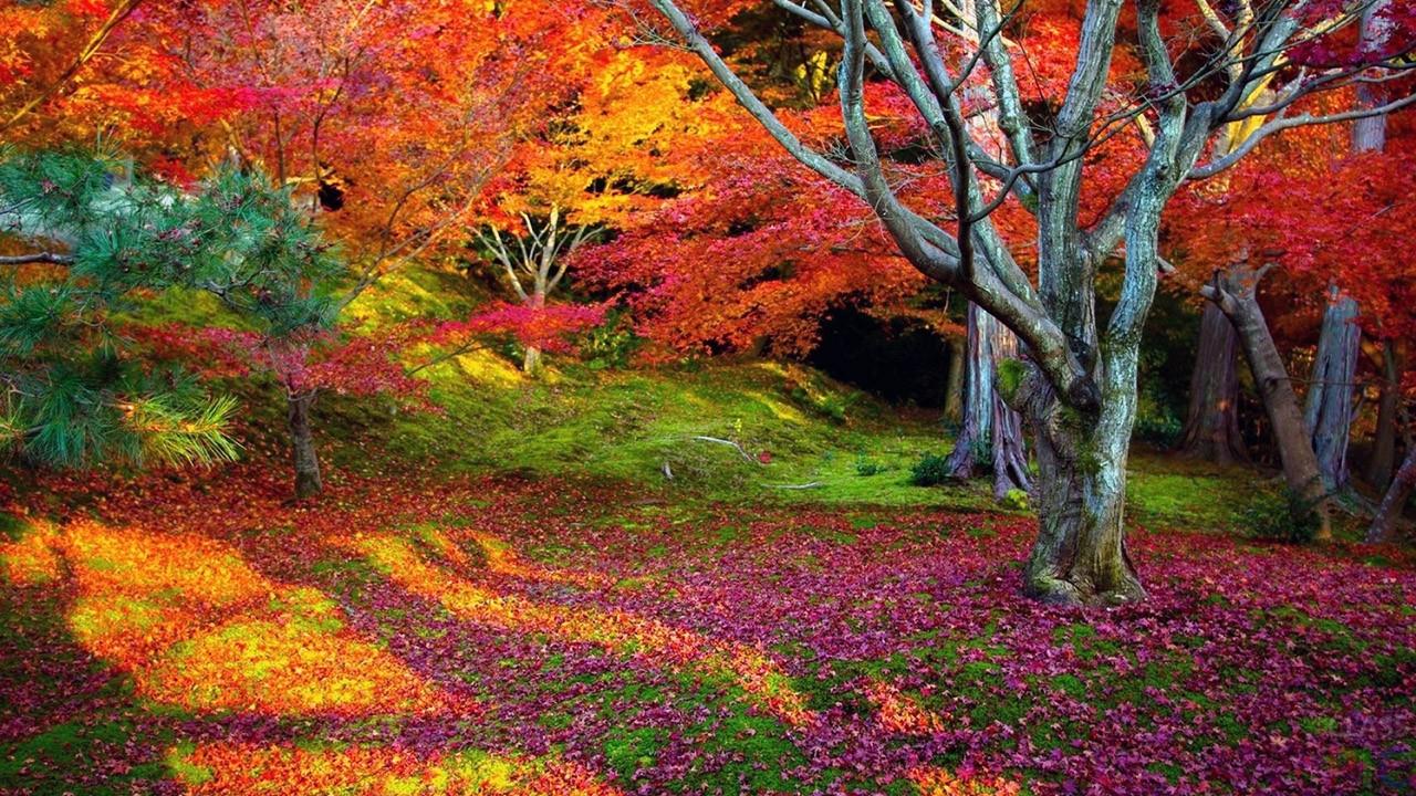 Осень и листопад (64 фото)