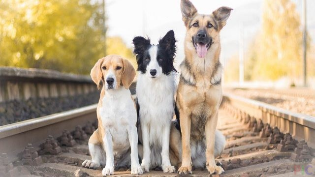 Фото породистых собак