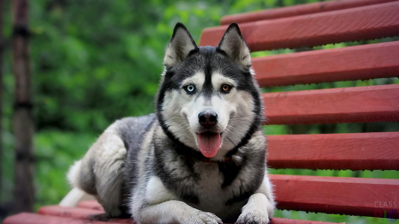 Породы собак с названиями (31 фото)