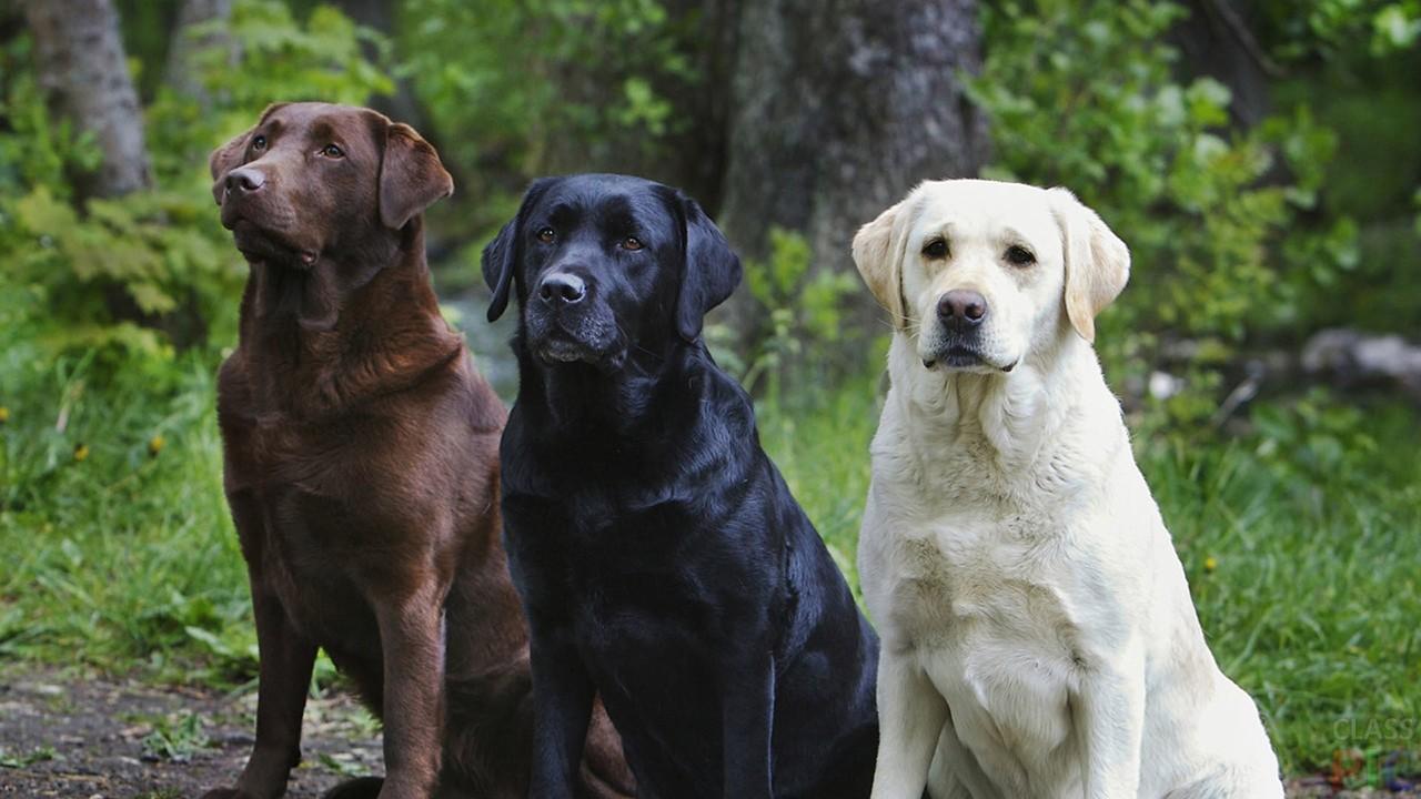 Фото взрослых собак