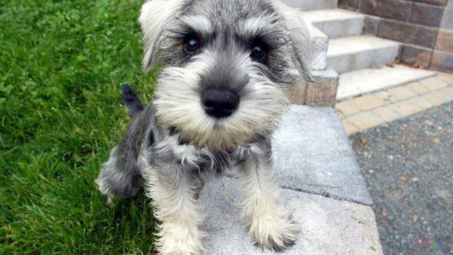 Собаки маленьких пород (34 фото)
