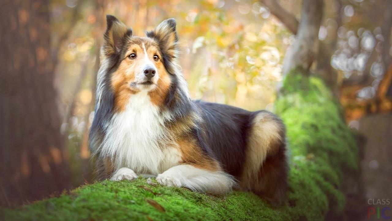 Фото красивых собак