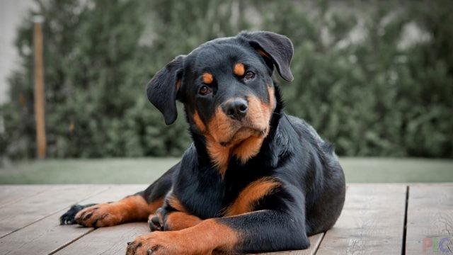 Фото охотничьих собак