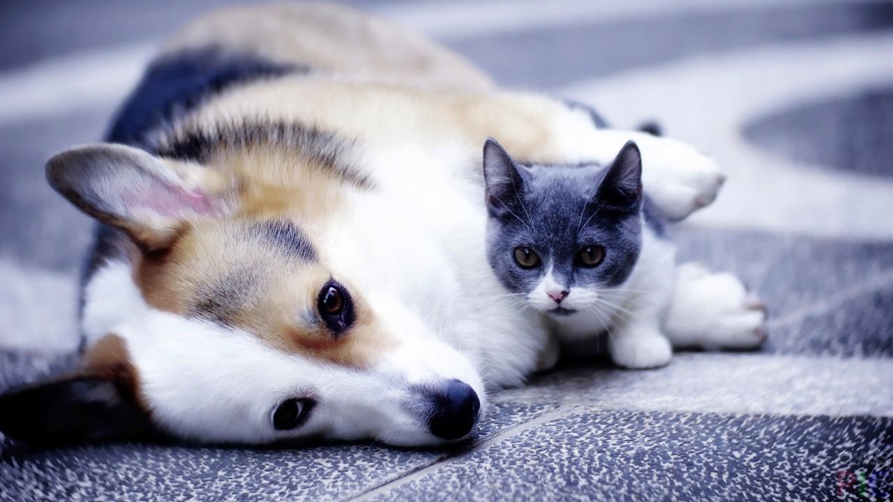 зарубежных картинки на планшет собаки и кошки где данный период