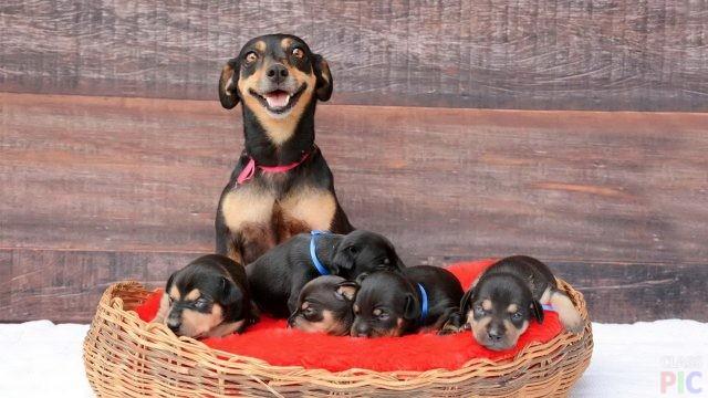 Собаки со щенками (28 фото)